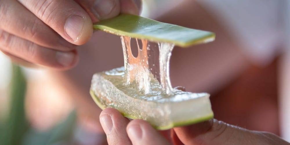 Cách làm chất bôi trơn bằng cây nha đam